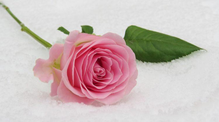 rose mariage