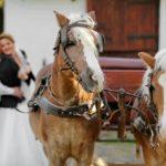 Arrivée de mariage : 3 idées originales pour vous faire remarquer